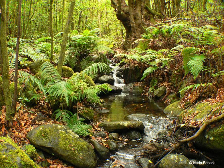 stream in spanish forest
